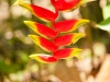 Plantelivet på Borneo er rikt