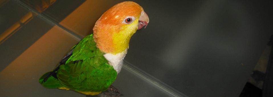 Fuglene