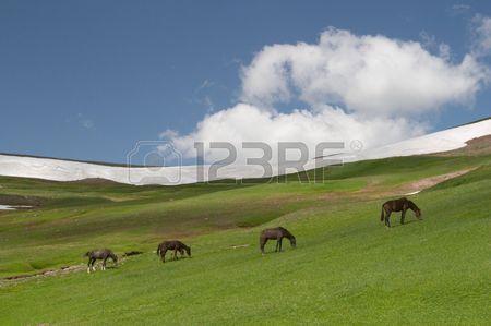 326623-horses-grazing-kyrgyzstan