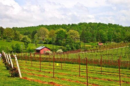 7352547-small-winery-and-barn-in-the-spring