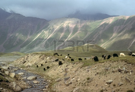 9645017-marco-polo-sheep-grazing-on-flat-steppes-owned-by-nomads-descentdants-of-the-mongols-of-genghis-khan