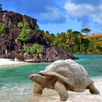 13718109-large-turtle-megalochelys-gigantea-at-the-sea-edge-on-background-of-a-tropical-landscape