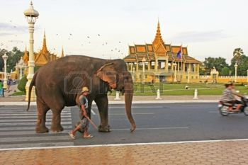 18012574-elephant-walking-on-sisowath-quay-city-center-of-phnom-penh-cambodia