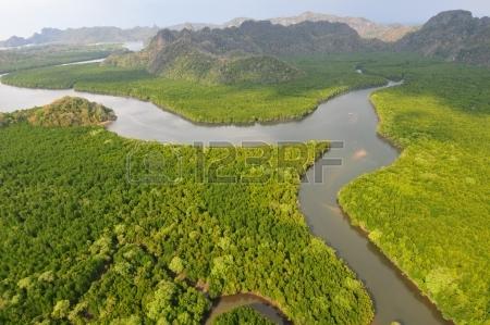 9208889-the-langkawi-island-mangrove