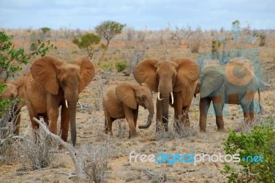 elephants-10026989
