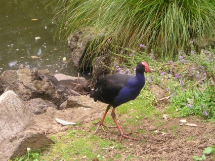 new_zealand_bird_nature_229047