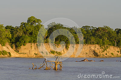 rufiji-river-tanzania-hippos-selous-game-reserve-africa-selous-was-designated-unesco-world-heritage-site-38752521