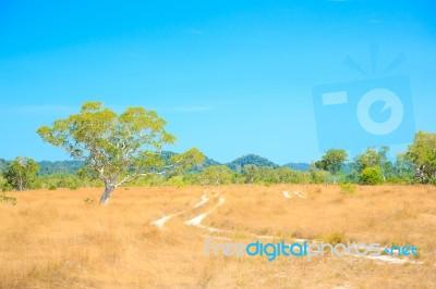 savannah-landscape-100151576